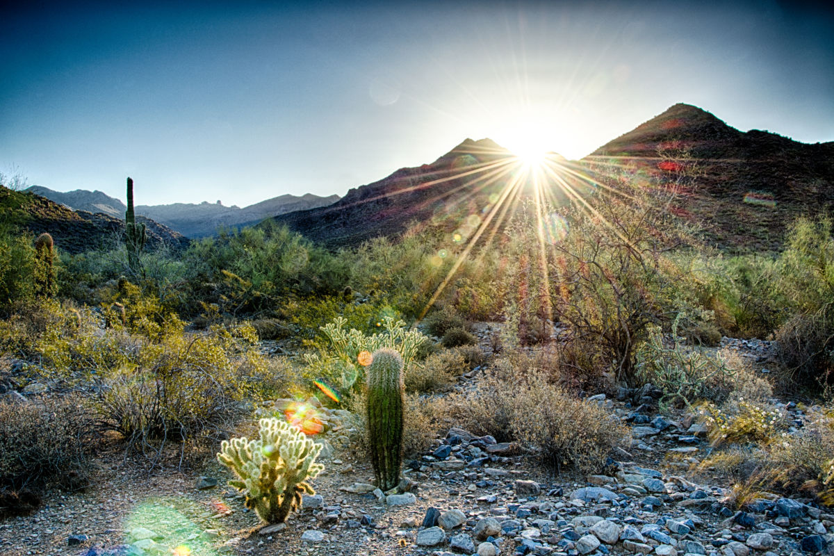Scottsdale's Living Treasure: The McDowell Sonoran Preserve