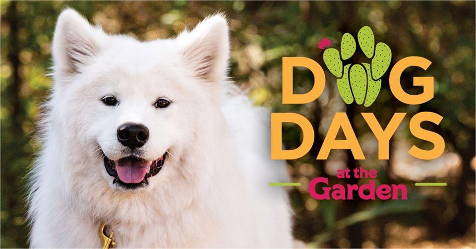 Dog Days at the Garden | November 7th - 21st, 2020
